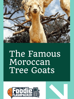 The Famous Moroccan Tree Goats