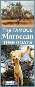 I had heard about the Moroccan tree goats from friends that had previously visited the country. While I thought it sounded cool and maybe like a good Instagram photo I didn't think it interesting enough to seek out or pay to specifically go see. Fortunately, we found the famous tree climbing goats by accident.