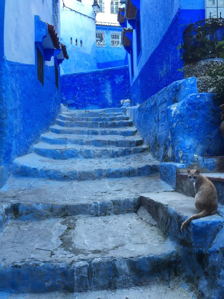 Chefchaouen is unlike any other city that I visited while touring the country of Morocco. Click the photo to find out why!