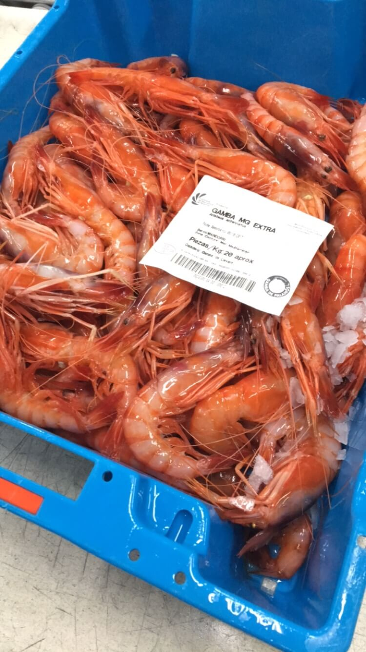 red prawns Palamos Spain Costa Brava