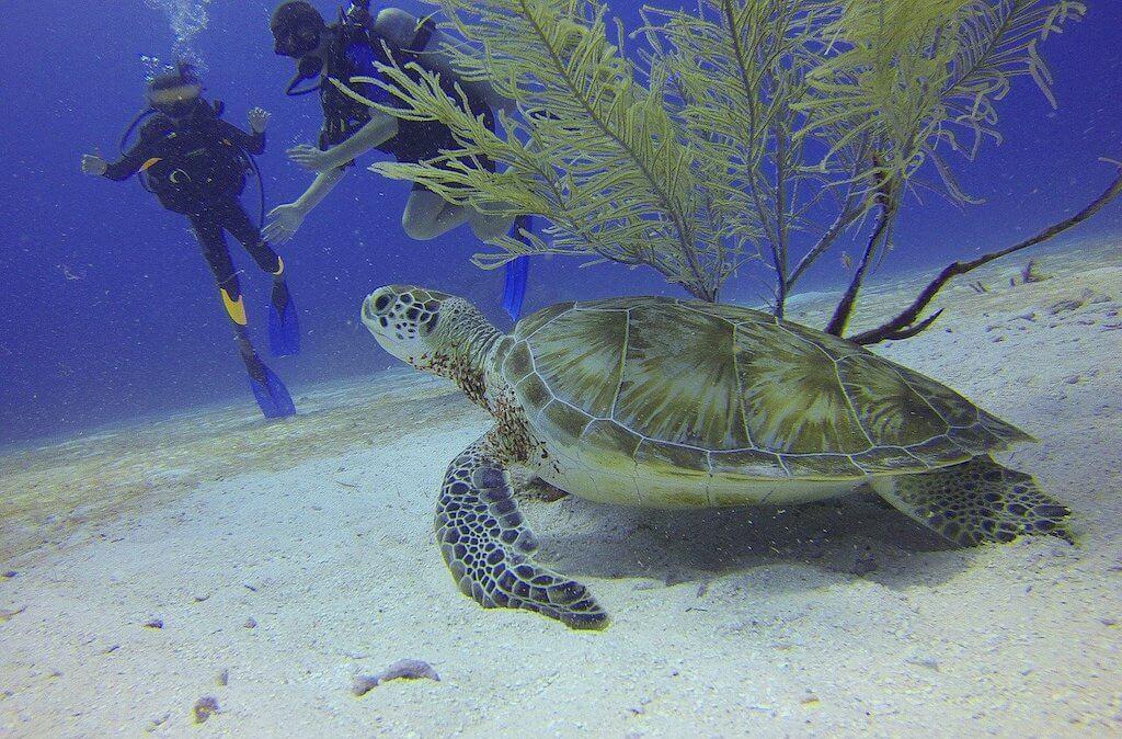 diving Cozumel ScubaTony