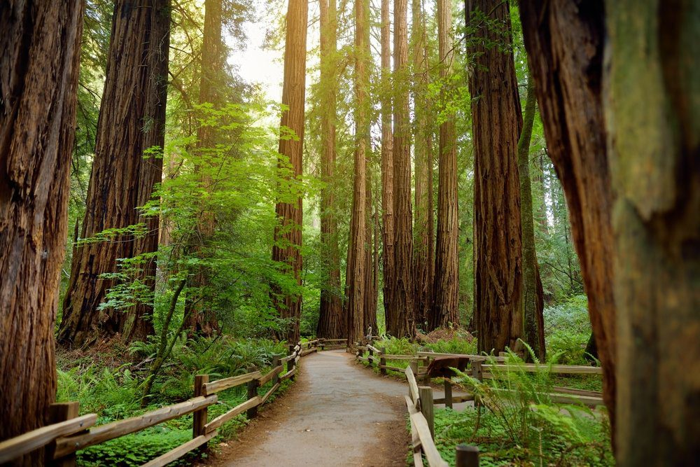 Best Things To Do In Half Moon Bay: California Coastal Trail thought the forest