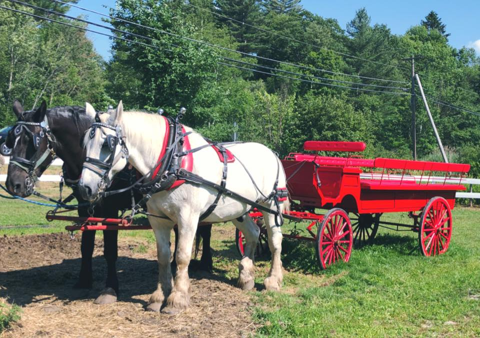 10 Best Things To Do In Stowe VT: Horse Carriage