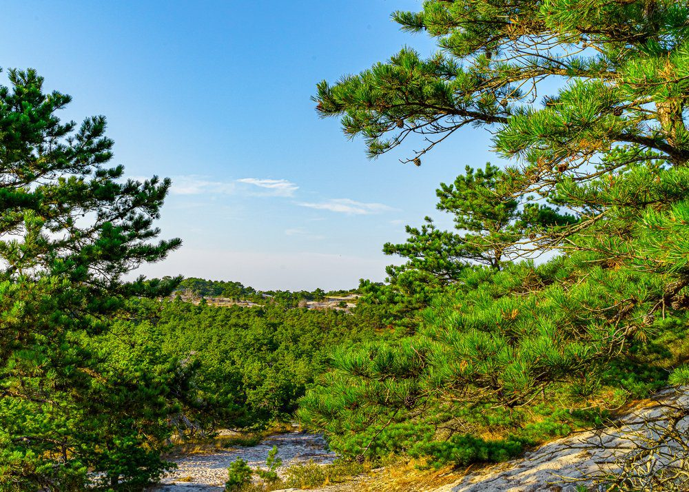 8 Best Things To Do In Cape Cod: Nickerson State Park
