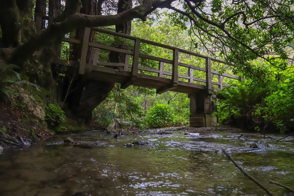 Best Things To Do In Half Moon Bay: Purisima Creek Redwoods