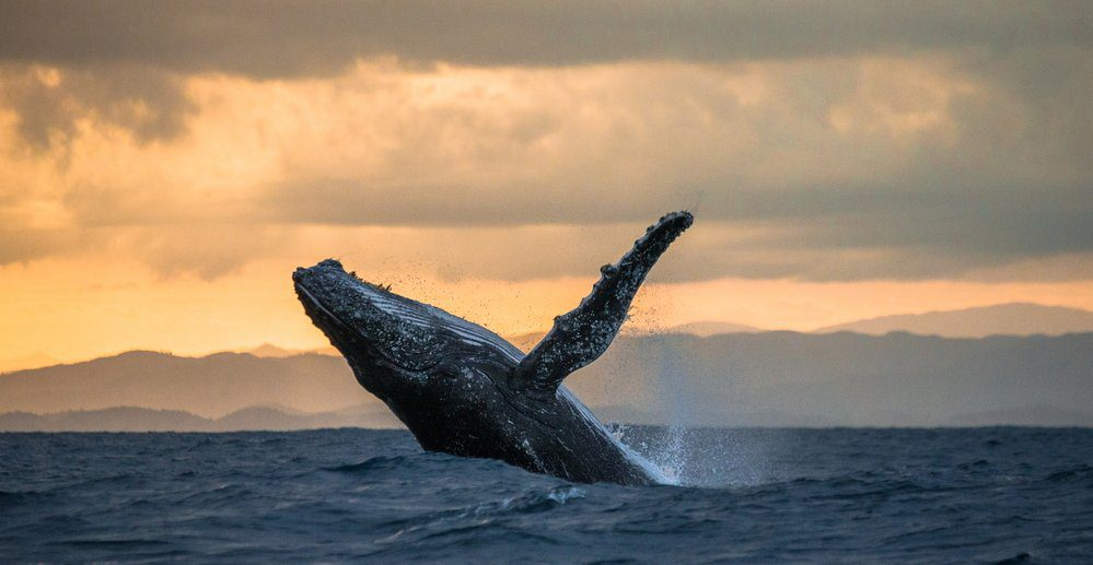 Best Things to Do in Cabo San Lucas: Whale jumping out of water