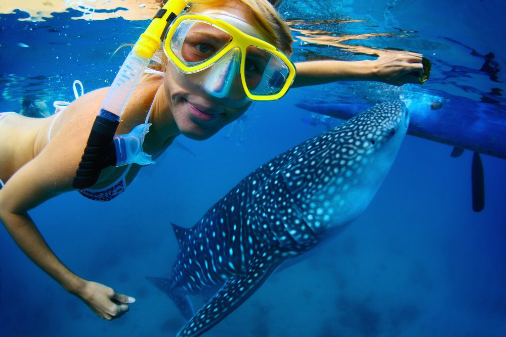 Best Things to Do in Cabo San Lucas: Swimming with whale sharks