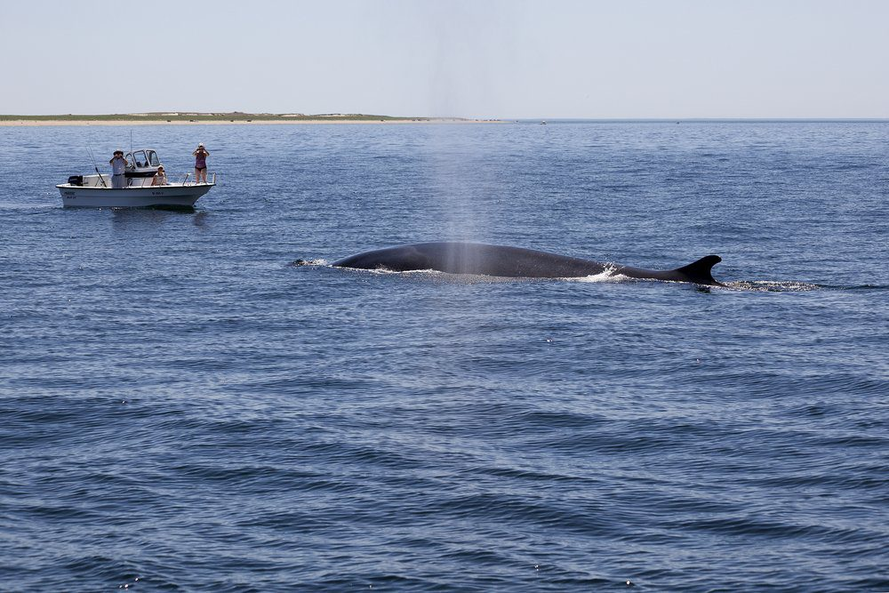 8 Best Things To Do In Cape Cod: Watching Whales