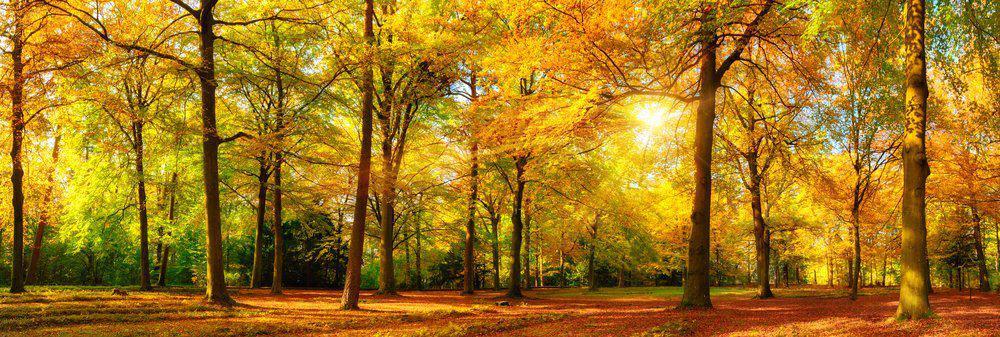 5 Amazing Things To Do In Sebastopol: Ragle Ranch Regional Park