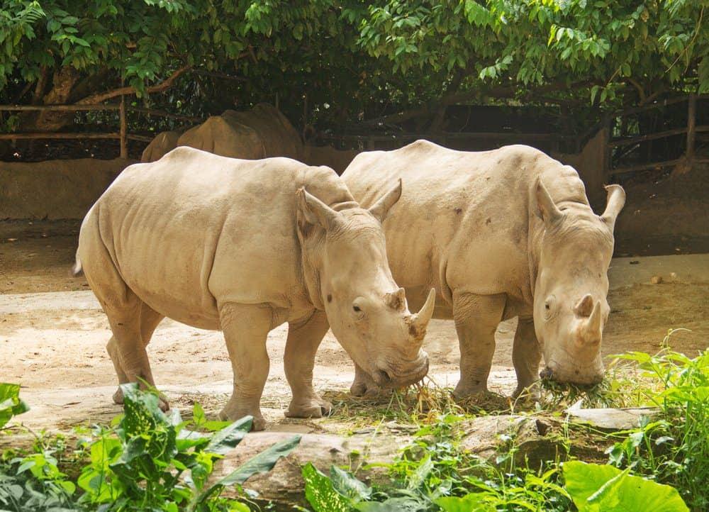 Things To Do In Bali: Bali Zoo