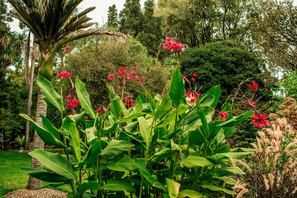 6 Best Things To Do In Oklahoma City: Botanical Garden