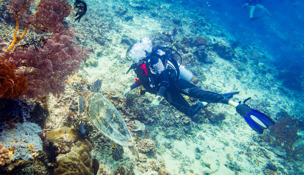 The Best Things To Do in Sayulita: Diving