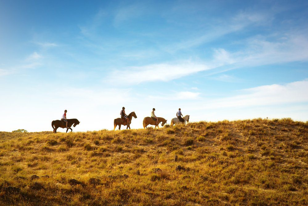 Top Things To Do In Goodyear Arizona: Horseback Riding