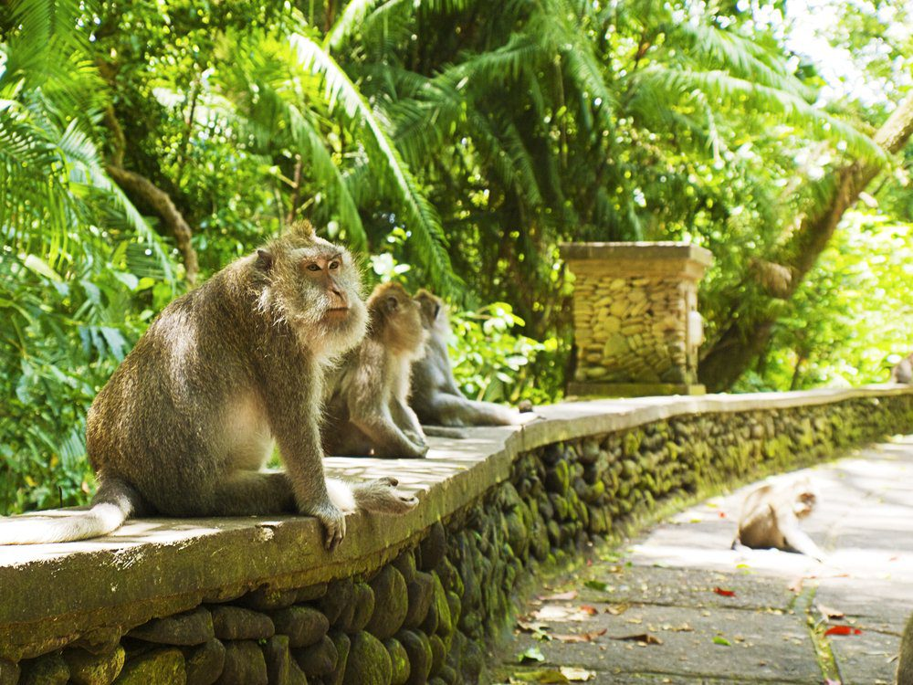 Things To Do In Bali: Monkey Forest