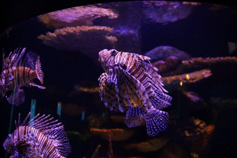 Things To Do In Tulsa: Oklahoma Aquarium