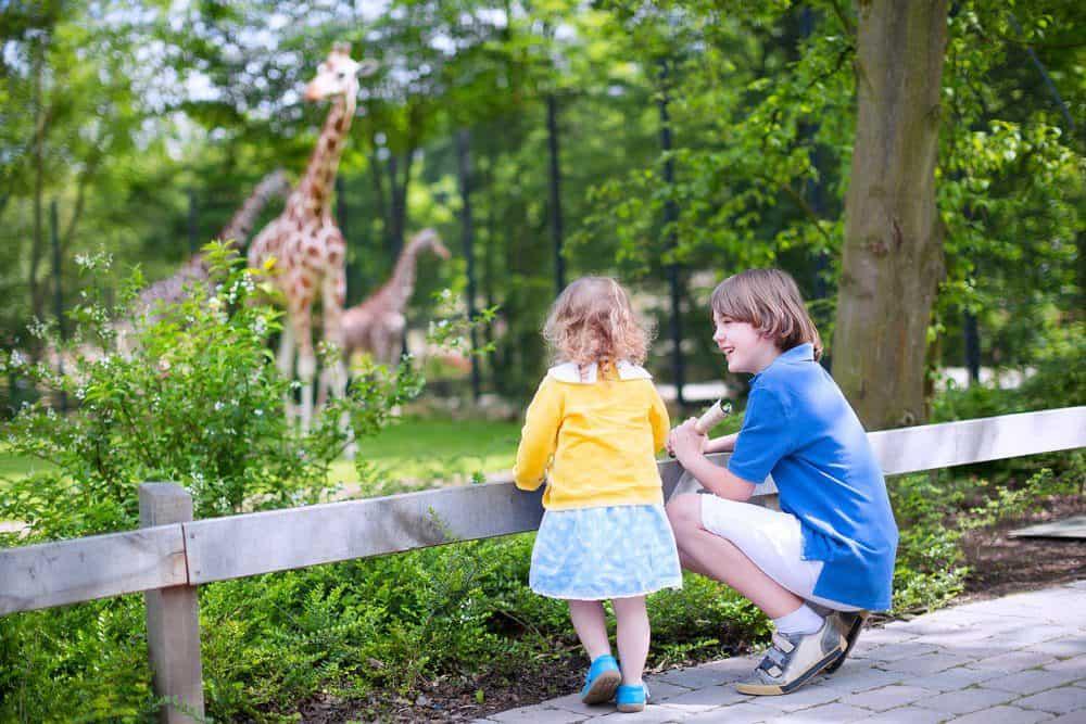 6 Best Things To Do In Oklahoma City: Oklahoma City Zoo