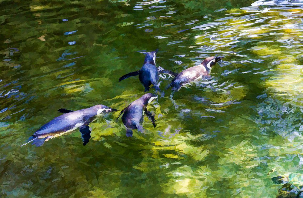 Things To Do In Tacoma: Point defiance zoo