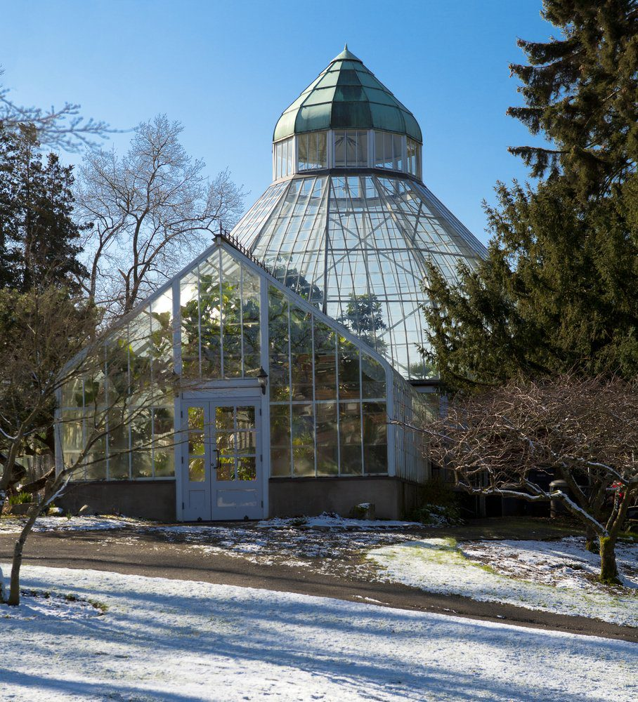 Things To Do In Tacoma: Botanical Conservatory