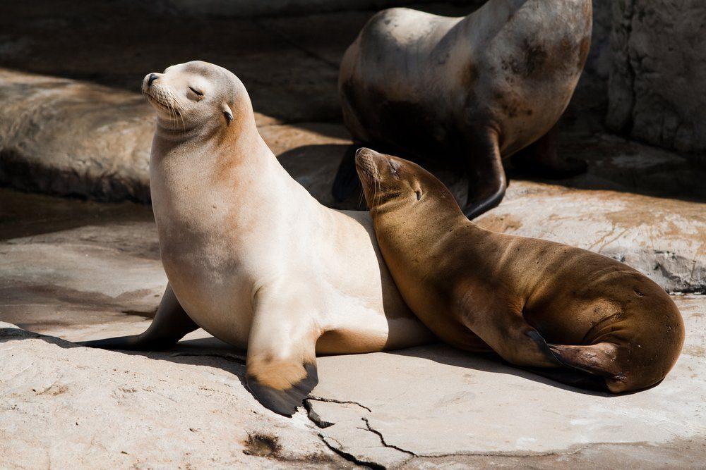 Things To Do In Laguna Beach: Seals