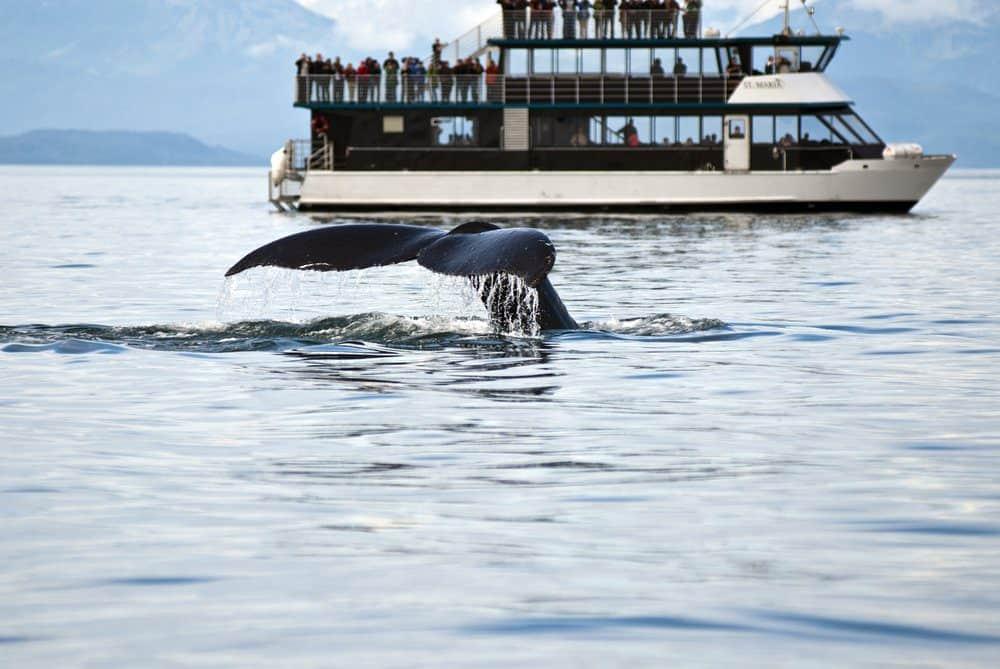 Things To Do In Laguna Beach: Whale Watching