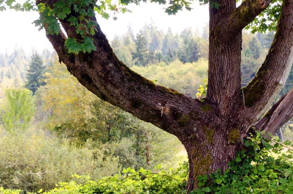 Things To Do In Redmond WA: Evans Creek Preserve